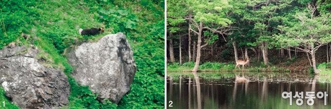 세계자연유산이 된 시레토코 원시림