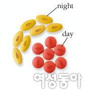낮과 밤 구분해 먹는 맞춤형 감기약