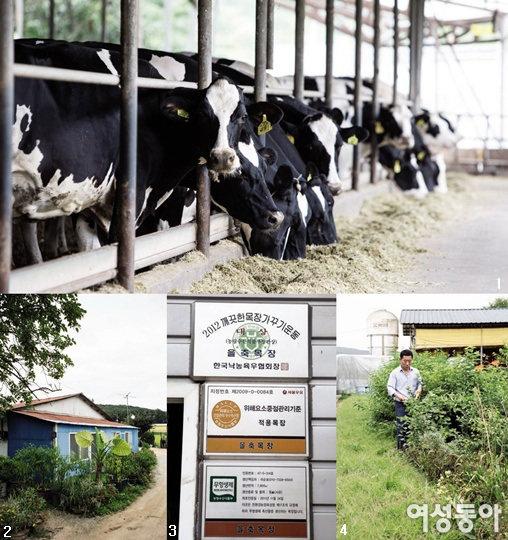 친환경 목장에서 찾은 1등급 우유
