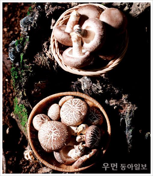 밥 한 그릇에 영양이 듬뿍~ 표고버섯영양밥
