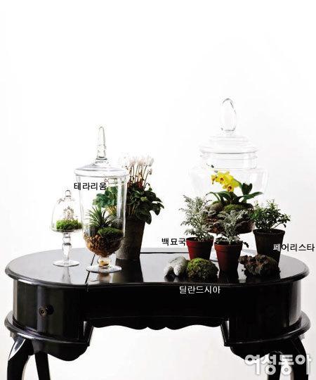 초록식물 집 안에 들이기