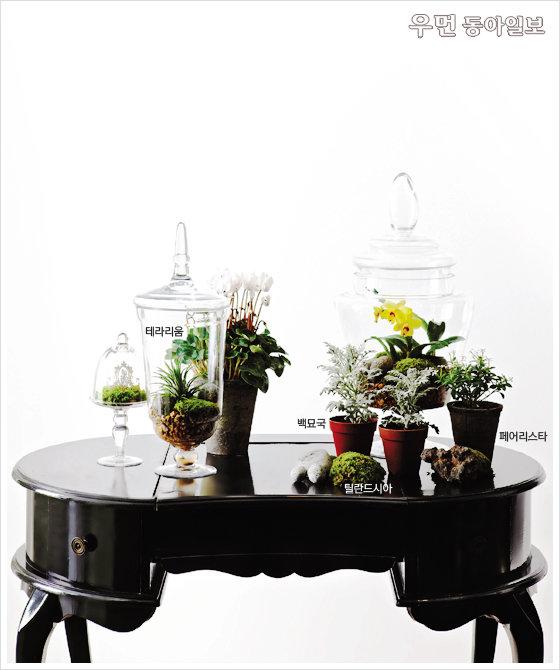 공기 정화+가습 효과~ 초록식물 집 안에 들이기