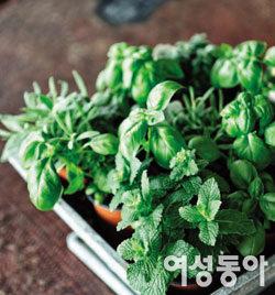 김행의 집밥[zip-bob] 이야기