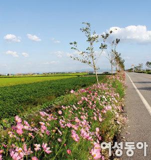 조정래 '아리랑'의 무대 전북 김제