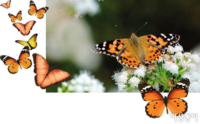 시아버지의 꾸지람, 나비가 날아다니는 꿈은 무슨 의미일까요?