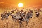 더 늦기전에 떠나자, 아프리카 야생의 세계로