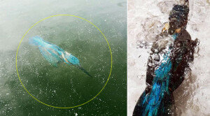 물 속에서 그대로 얼어 죽은 새… 유럽 이례적 한파에 몸살!