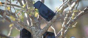 배달 한 건이라도 더 잡으려고… 아마존 물류센터 앞 '스마트폰 나무'