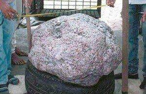우물 파다… 510kg 세계 최대 사파이어 원석 발견