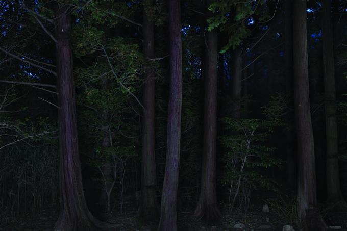 Taejoong Kim, Foresta, Foresta 07, 2013, Pigment Print.