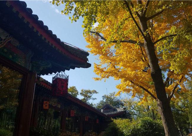 베이징 르탄 공원에서 본 푸른 하늘. [강민수]