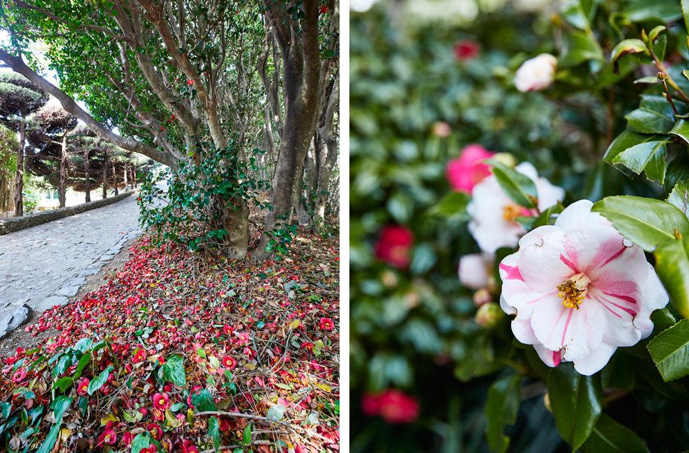 이 꽃 길 따라 잠시 쉬어가다가 그 자리 그곳에서 날 기다려요