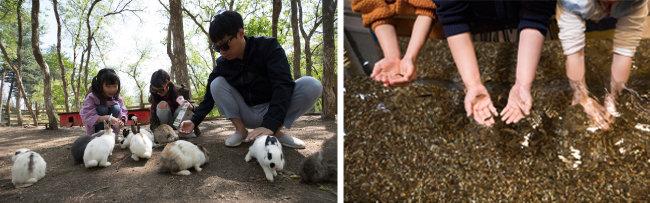 체험형 동물원에서는 토끼, 닥터피시(왼쪽부터) 등 다양한 동물과 교감할 수 있다. [지호영 기자]