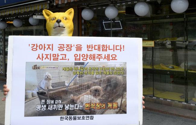 2016년 6월 17일 서울 중구 충무로에서 한국동물보호연합 회원이 강아지 공장 반대 1인 시위를 하고 있다. [뉴스1]