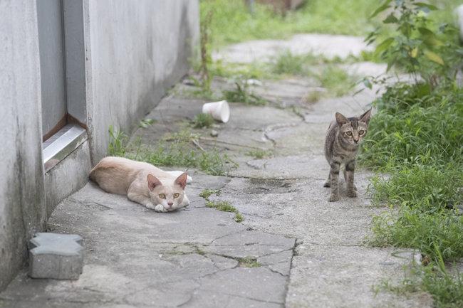 골목길에서 한자리를 차지하고 있는 길고양이들.