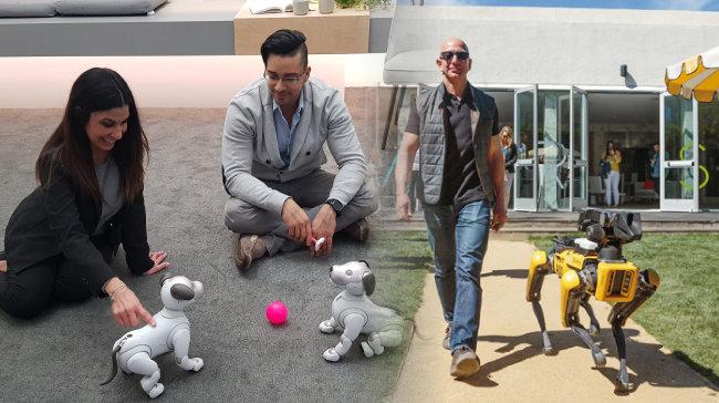 소니의 반려로봇 '아이보'(왼쪽). 제프 베이조스 아마존 CEO가  로봇개와 산책하는 모습. [소니 제공, 제프 베이조스 트위터]