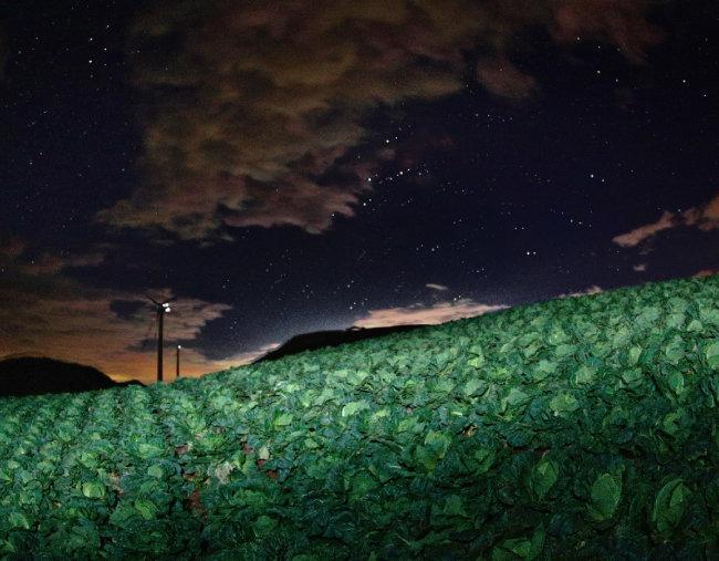 귀네미 마을이 있는 태백시는 열대야가 없는 고장이다. 늦더위가 아직 물러가지 않은 9월, 벌써 한밤의 온도가 10도 이하까지 내려갔다. 배추밭의 밤 풍경은 평화롭고 고요하다.