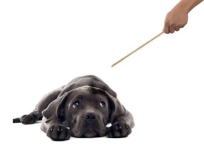체벌은 개에게도 효과 없다