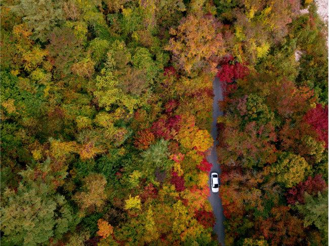 단풍이 가득한 숲길