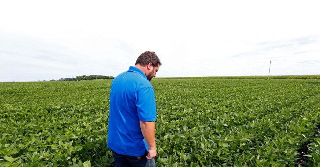 중국 보복 관세 대상이 된 콩을 생산하는 미네소타주의 농원.