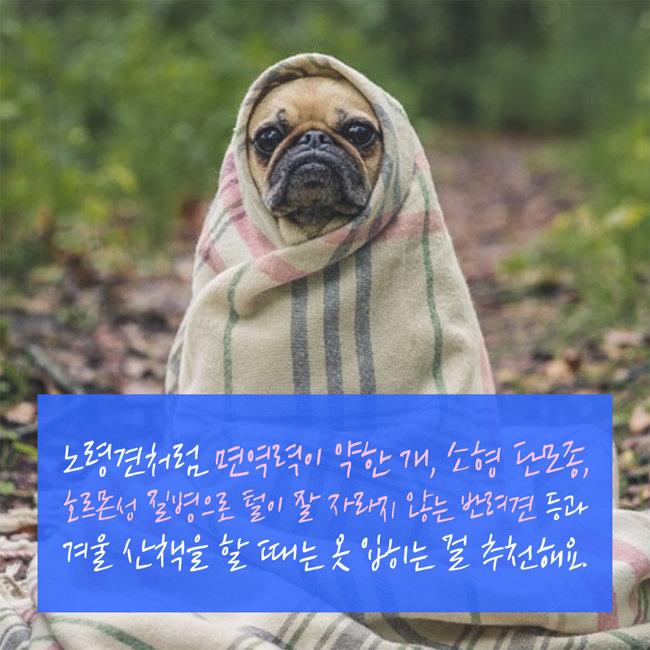 혹시 우리 강아지도 우울증일까?