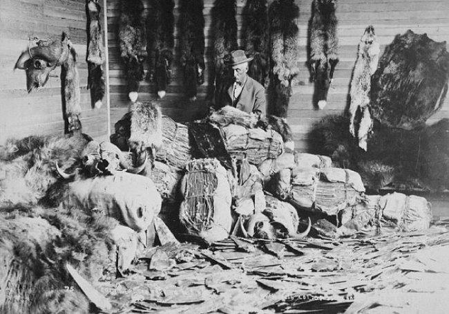 1890년대 캐나다 알베르타의 모피상. [위키피디아]