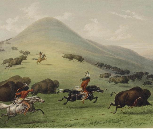 네이티브 아메리칸들의 버펄로 사냥.