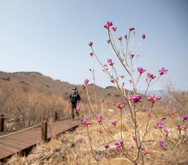 이른 꽃이 핀 등산로를 봄을 서둘러 즐기고픈 등산객이 찾았다.