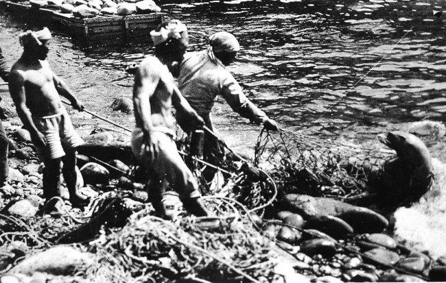 일본 어민이 1934년 독도에서 강치를 잡는 모습. 일본의 남획으로 독도 강치는 멸종됐다. [서해문집 제공]