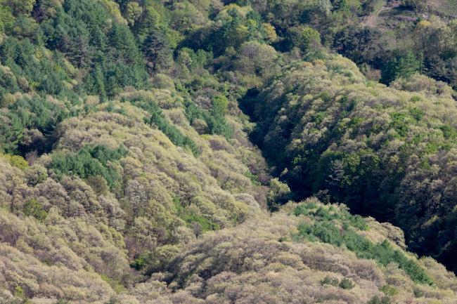 신록이 우거진 숲.
