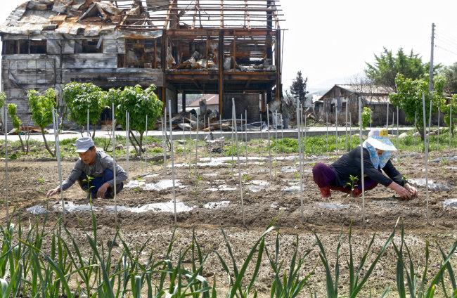 전소된 건물 뒤로 밭을 가꾸는 주민들.
