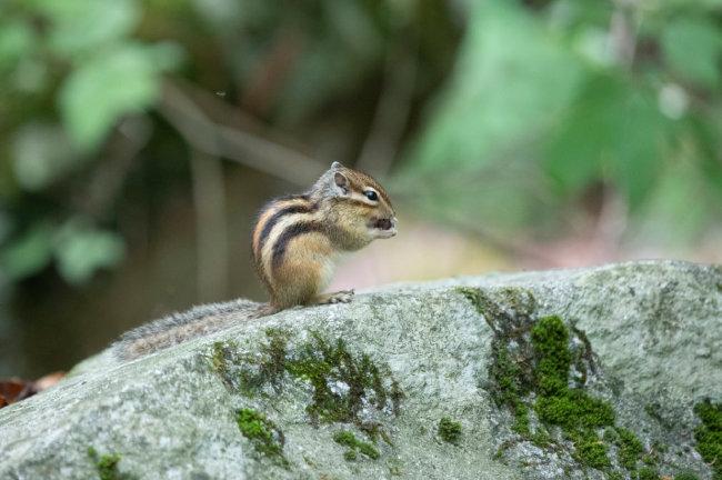 다람쥐도 잠시 삼림욕(森林浴)을 즐긴다.