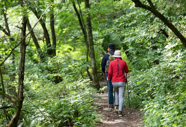 등산로를 걷다 보면 녹음(綠陰)의 내음이 몸으로 스며든다.