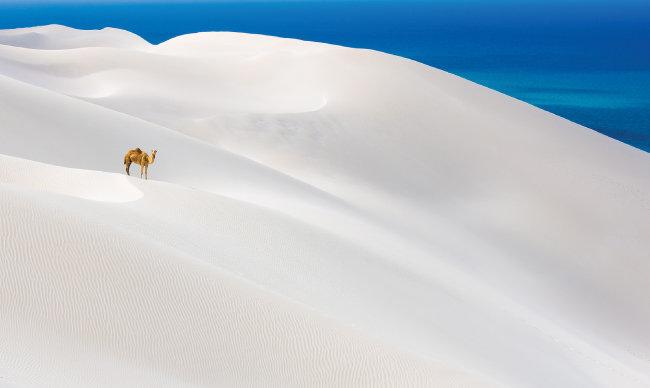 예멘 남동쪽 소코트라섬의 사막에서 낙타 한 마리가 길을 잃은 듯 외로이 서 있는 모습을 포착했다.