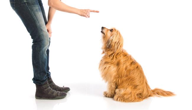 시도 때도 없이 짖는 개 '조용' 신호 가르치는 방법