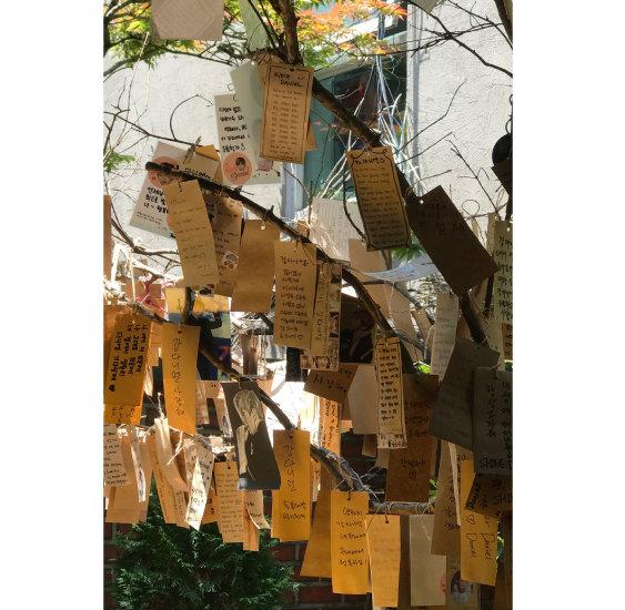 다니엘 포레스트 '강다니엘 응원나무'에는 팬들의 응원 글이 가득 걸려 있다.