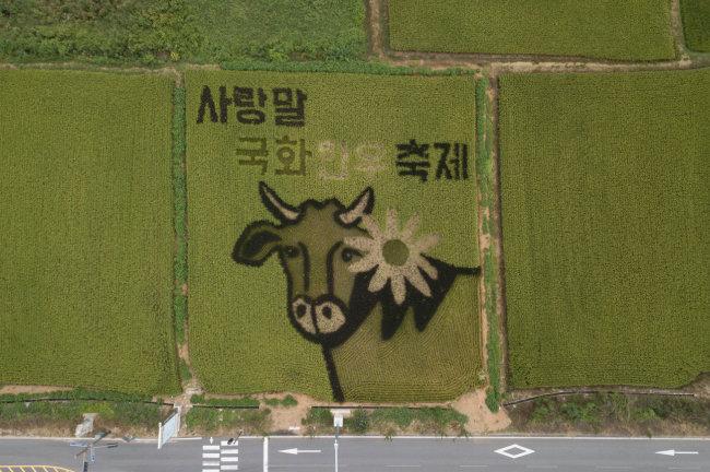 꽃을 단 우리 소가 강원 홍천의 논 그림 속에 새겨져 있다.