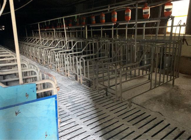 아프리카돼지열병이 발생한 경기도의 한 농장.