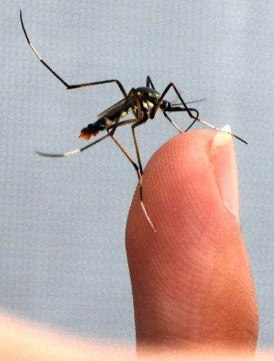 코로나19는 비말을 통해 전파되는 감염병으로, 모기를 통해 감염될 수 있다는 증거는 확인된 게 없다. [양회성 동아일보 기자]