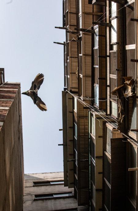 한 마리 새가 아파트와 아파트 사이를 가로질러 날고 있다.