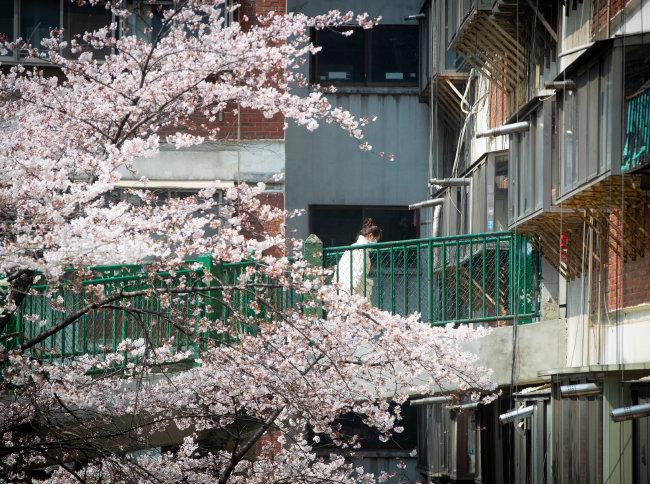 아파트 입구에 꽃이 만발했다. 또 세월이 쌓이는 건 야속해도 봄날의 꽃이 반가운 건 어쩔 수 없다.