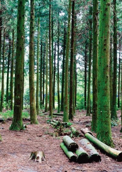 유네스코가 지정한 제주 생물권      보전지역인 사려니숲길. [GettyImage]