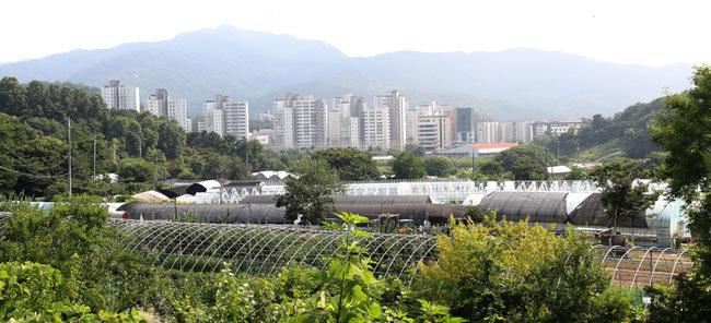 7월 16일 서울 서초구 개발제한구역 내에서 본 내곡동 보금자리 주택단지. [홍진환 동아일보 기자]