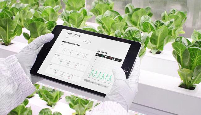 사물인터넷(IoT)을 접목해 태블릿으로도 스마트팜을 관리할 수 있다. [엔씽 제공]