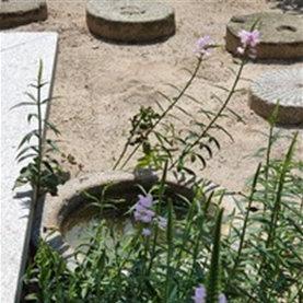 꽃범의꼬리