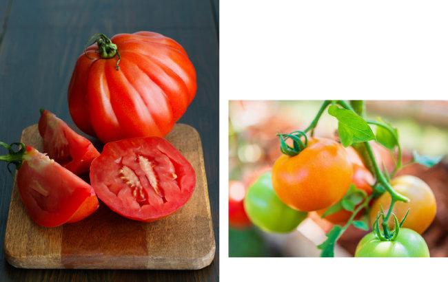건장한 근육을 가진 것처럼 다부지게 생겨 '소의 심장'이라 불리는 토마토(왼쪽). 껍질이 얇고 달콤해 젤리 같은 식감을 내는 젤리토마토. [GettyImage]