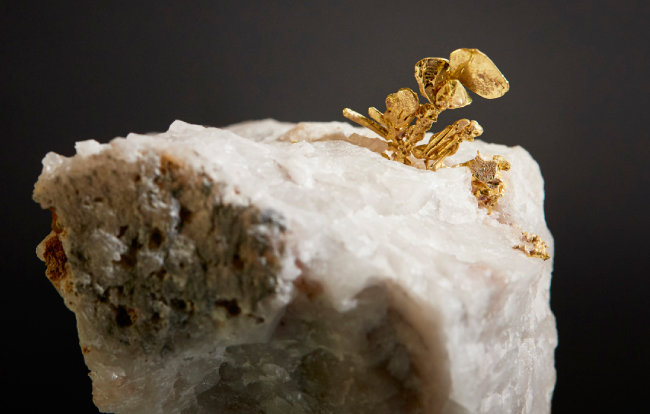 금(Gold)  암석 사이에서 금이 용출되며 결정으로 변해 마치 꽃처럼 보인다.