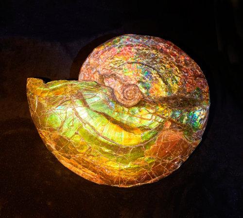 암모나이트(Ammonite) 화석  중생대 백악기에 멸종한 연체동물 화석. 오랜 세월이 흐르는 동안 암모나이트 표면이 투명해져 빛을 아름답게 반사하는 천연 보석이 됐다.