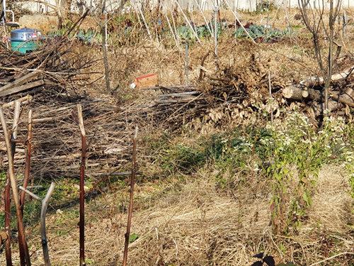 근 한 달간에 걸쳐 마당의 나무들과 밭 유실수들의 가지치기를 했다. 가지치기 한 가지들을 다시 잘게 썰었다. 땔감으로 사용한다. 솥과 솥걸이도 샀다. 온 밭에 땔감이 쌓였다. [신평 제공]