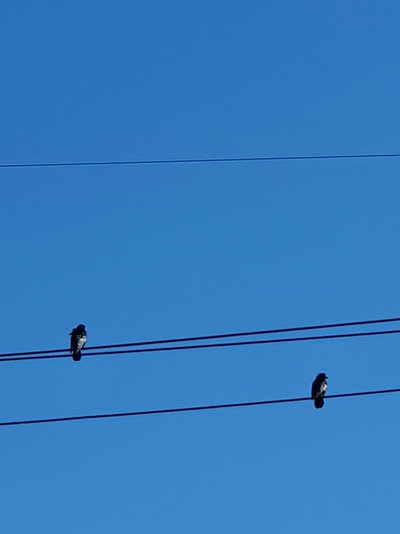 겨울은 외롭다. 서럽다. 가난하고 약한 이들에게, 코로나까지 덮친 올 겨울은 더욱 잔인하다. 전깃줄에 앉은 새들도 겨울의 날카로움을 느낀다. 풀씨도 적어지고, 마실 물은 얼어 붙어버렸다. 그래도 푸른 하늘을 쳐다보며 희망을 잃지 않는다. 겨울은 곧 지나갈 것이므로…. [신평 제공]